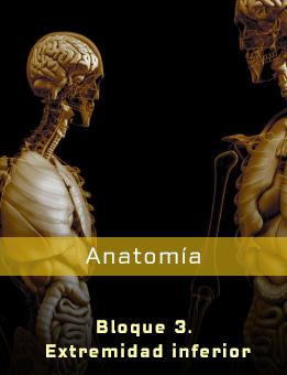 Resumen del miembro inferior anatomia pdf